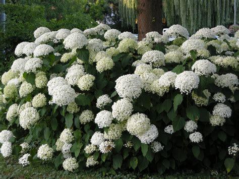 Weiße Garten Puregardenat