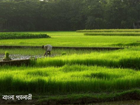pic  posts wallpaper agriculture