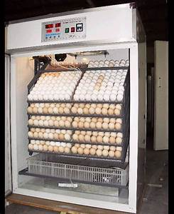 Chick Incubator Humidity Too High Guide