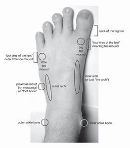 Parts Of The Feet And Ankles