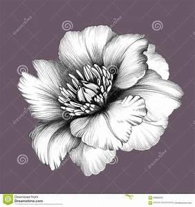 Flower. Pencil Drawing. Stock Illustration - Image: 60806940