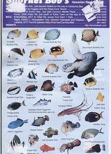 Free Chart Snorkel Bob 39 S Fish Id Chart Page 1 Cory Flickr