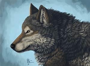 Wolf Profile (40 Wallpapers) – HD Desktop Wallpapers