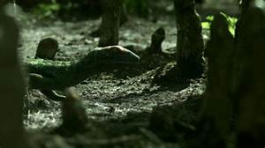 Image - Petrolacosaurus.jpg | Walking With Wikis | FANDOM ...