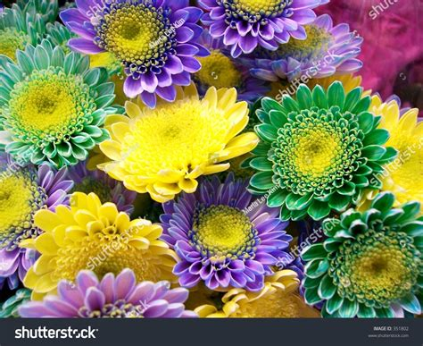 multi colored flowers multicolored flowers stock photo 351802
