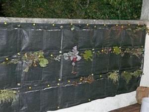 Décorer Un Mur Extérieur : 1er anniversaire pour notre mur v g tal filtrant ~ Dailycaller-alerts.com Idées de Décoration