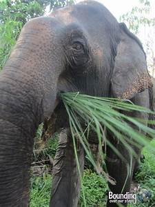 An Elephant Walk in Northern Cambodia