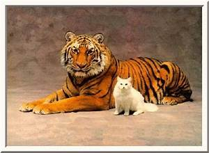 Nelson's Point of View: The tiger and the cat