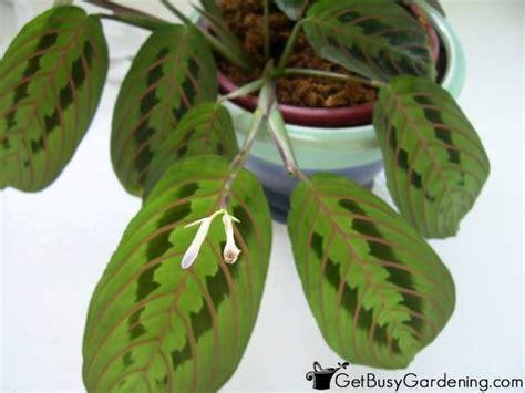 Indoor Plants Low Light Houseplants