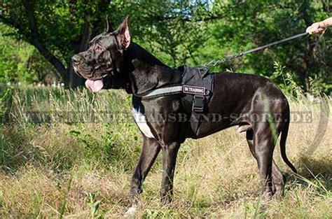 deutsche dogge hunde geschirr nylon  sport