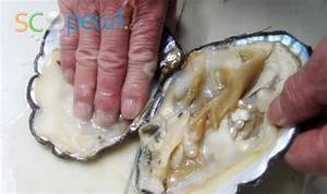 freshwater-pearl-clam-3 | Creative Prac 2 | Pinterest ...