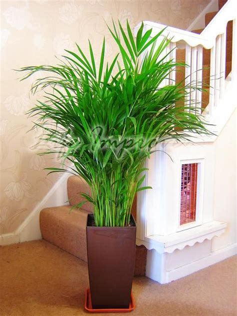 feng shui bureau green home decor that cleans the air top eco