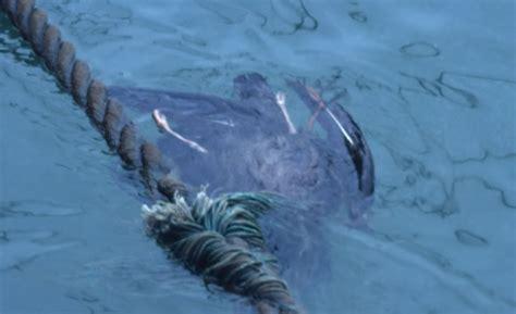 Smart Gear 2011: Seabirds off the Hook! | WWF