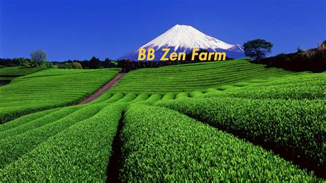 matcha tea farm zen kyoto farms rate quality bb origin