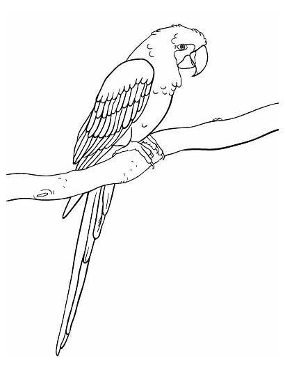 Macaw Coloring Pages Hyacinth Printable Colouring Pdf