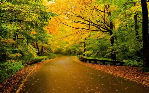 nature, Road, Trees Wallpapers HD / Desktop and Mobile ...