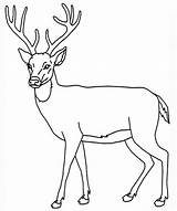 Deer Coloring Pages Enjoyable Leisure Totally Activity sketch template