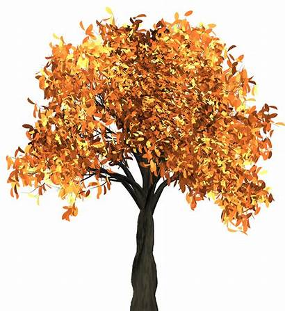 Tree Transparent Autumn Fall Background Leaves Clipart