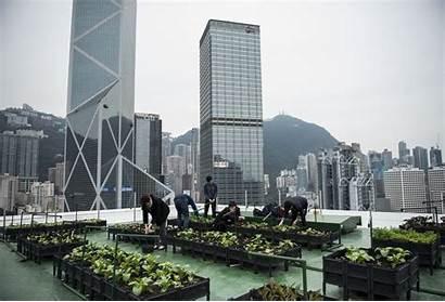 Rooftop Hong Kong Urban Farming Roof Republic