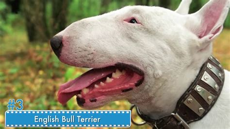 top 10 ugliest dogs and dog breeds in the world youtube