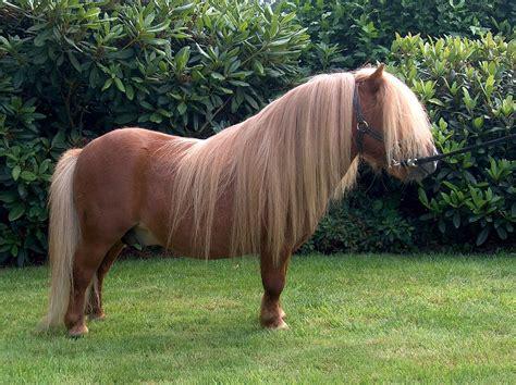 süße pferde bilder pony pferd