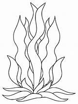 Seaweed Coloring Pages Printable Getdrawings Getcolorings sketch template