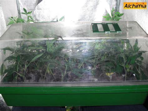 Serre Quand Ouvrir by La Bouture De Cannabis Blog Du Growshop Alchimia