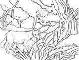 Coyote Coloring Pages Printable Desert Cool2bkids Cartoon Getcoloringpages sketch template