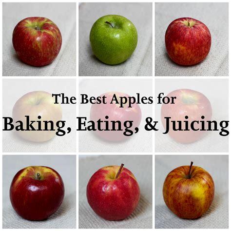 apples baking apple eating guide juicing