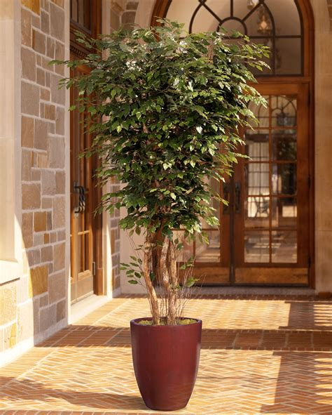 large ficus tree large 8 deluxe silk ficus tree at petals 3651