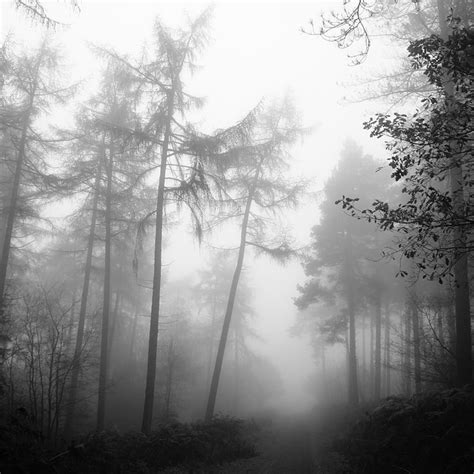 photo forest fog nature tree mystery