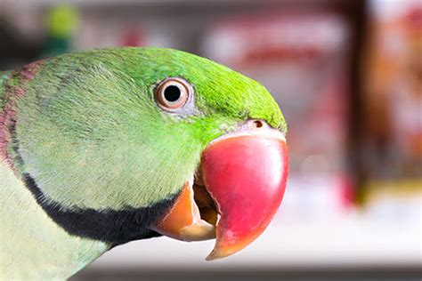 The Different Types Of Parrot
