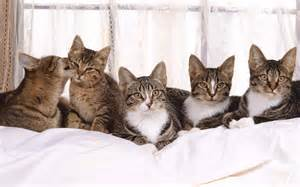 cat family cats family cats picture