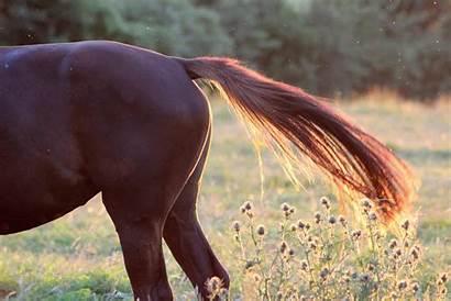 Tail Horse Communication Horses Hog Hair Effects