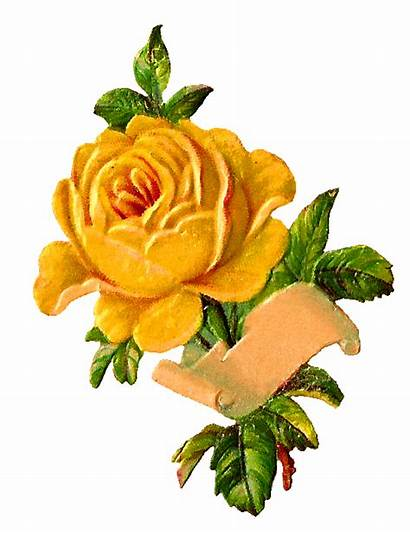 Yellow Rose Digital Label Clip Flower Clipart