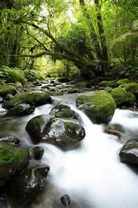 Beautiful Forest Streams Nature