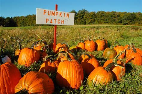 Hall Pumpkin Patch Charlotte Nc by Trackerap Blog