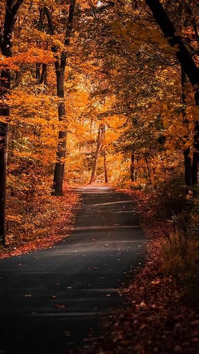 Iphone Autumn Trees Path Nature Road Foliage