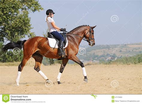 Rider On Bay Dressage Horse, Going Trot Stock Photo ...