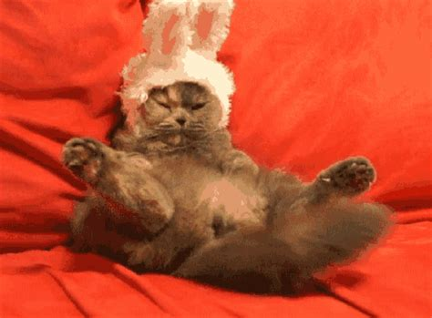 happy easter cute cat gifs