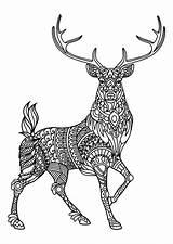 Coloring Animal Pages Pdf Mandala Adult Printable Dog Wolf Horse Deer Issuu Zoo Create Owl sketch template