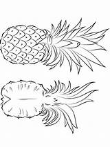 Pineapple Coloring Pages Fruits Print Printable Recommended Favorite sketch template