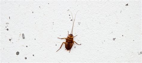 Tiny Roaches Are They Babies Or A Big Problem?  Abc Blog. Living Room Table Decoration. Affordable Living Room Decorating Ideas. Neutral Colours For Living Room. Accent Wall In Living Room Pictures. Large Wall Pictures For Living Room. Living Room Closet Doors. Living Room String Lights. Black White Silver Living Room