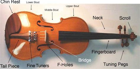 Diagram Of Violin Part by Buying Guide How To Choose The Right Violin The Hub