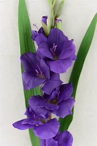 Gladiolus Flower Purple 33in
