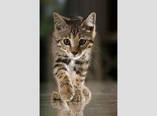 Lexikon der alternativen Medizin für Katzen GELIEBTE
