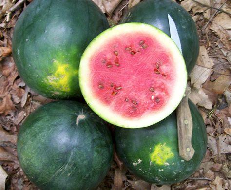 blacktail mountain watermelon   southern exposure