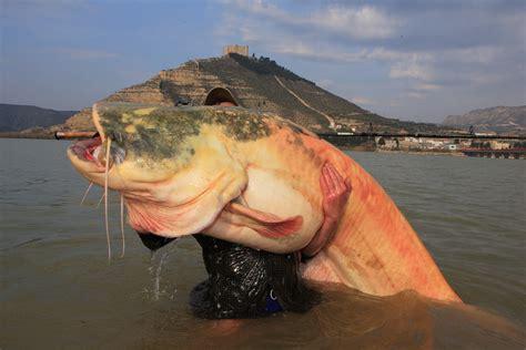 big fish forum roque mesa by riscajack planet swans
