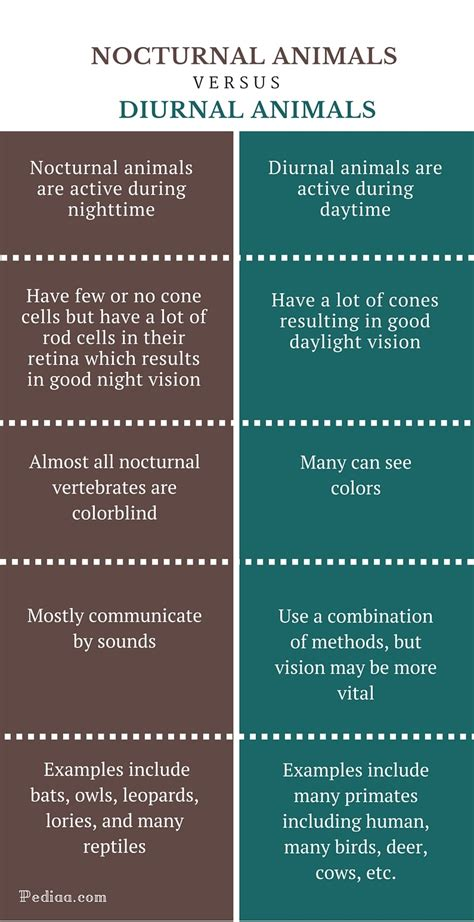 nocturnal diurnal between animals difference examples facts differences infographic