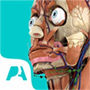 Ala of Sacrum - 3D Image and Description